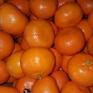clementine maroc au-potager-de-becheret ©