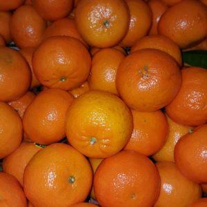 mandarine orri au-potager-de-becheret ©