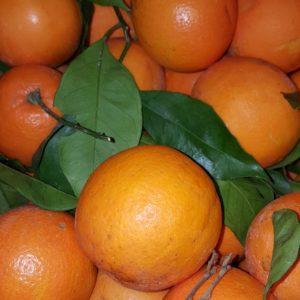 orange de sicile au-potager-de-becheret