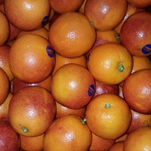 orange sanguine au-potager-de-becheret