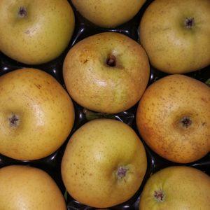pomme chantecler au-potager-de-becheret