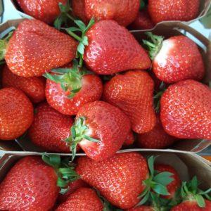 fraises carpentras au-potager-de-becheret©
