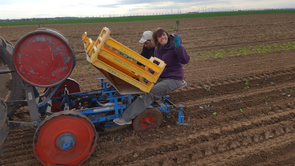 plantation chou au-potager-de-bechere