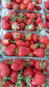 fraises du ribourdon 2018 au-potager-de-becheret©