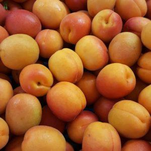 abricot espagne au-potager-de-becheret