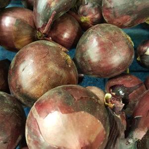 oignos rouges au-potager-de-becheret©
