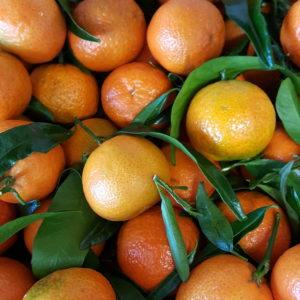 clementines corses au-potager-de-becheret.com©