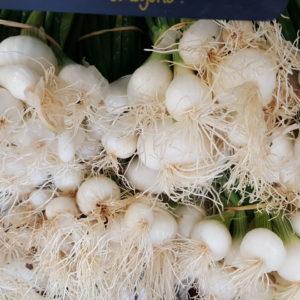 oignons blanc au-poatger-de-becheret.com©