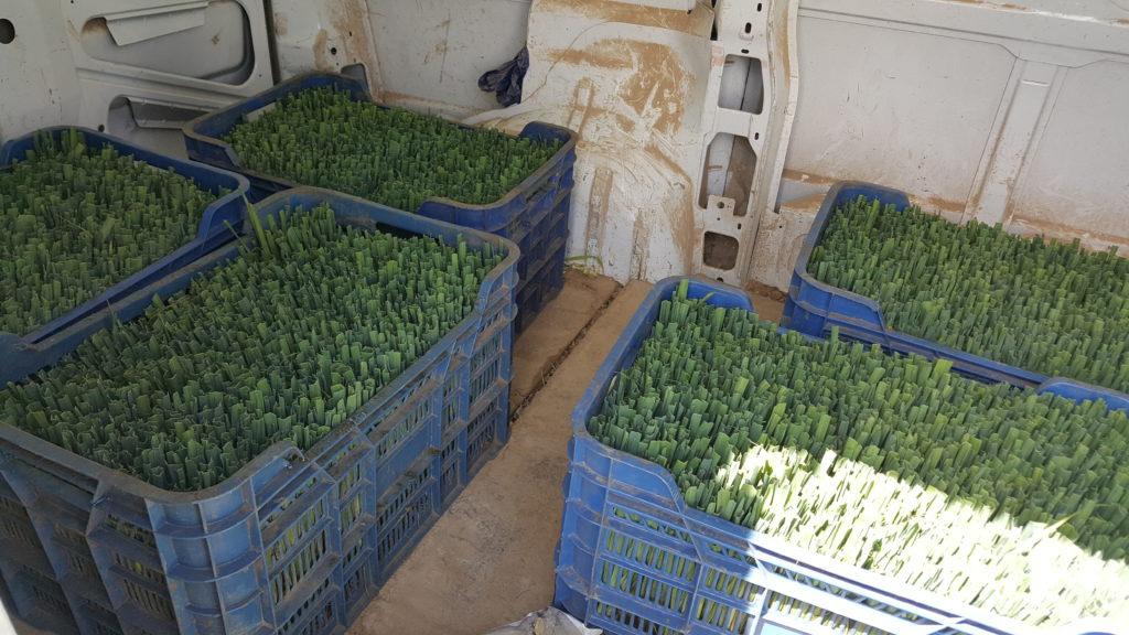 plantation poireaux 2019 au-potager-de-becheret.com©
